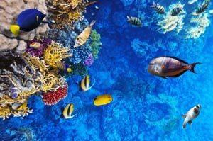 Tauchen - exklusiver Urlaub am Roten Meer