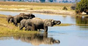 Elefanten auf Safari im Chobe Nationalpark in Botswana beobachten