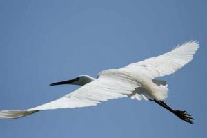 Vogelbeobachtung im Moremi Nationalpark