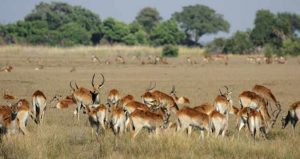Safari im Moremi Nationalpark