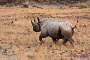 Das Khama Rhino Sanctuary bietet Nashörnern Schutz