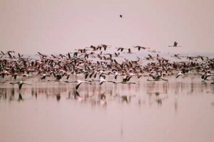 Vogelbeobachtung im Nata Bird Sanctuary