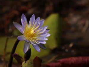 Auf Safari schöne Pflanzen entdecken