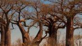 Botswana: typische Landschaft