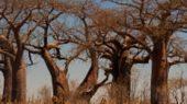 Safari im Makgadikgadi-Pans-Nationalpark