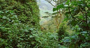 Ein Regenwald als Safariziel