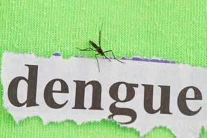 Infektionskrankheit Dengue-Fieber in Afrika