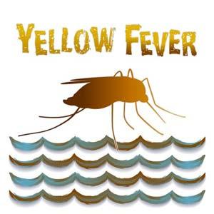 Gelbfieber ist eine gefährliche Infektionskrankheit