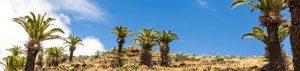 Kanaren: La Gomeras Tiere und Pflanzen