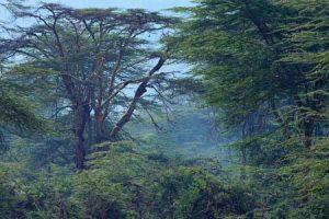Blick im Kakamega Regenwald