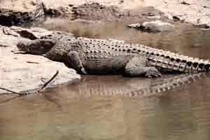 An den Flüssen der Nationalparks leben Krokodile