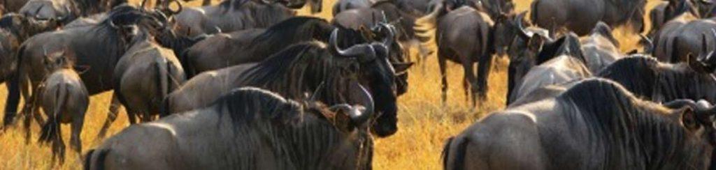 Kenia: viele Nationalparks warten