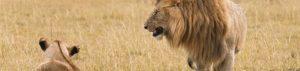 Kenia: Safari im Osten