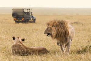 Kenia: Safari durch den Osten des Landes