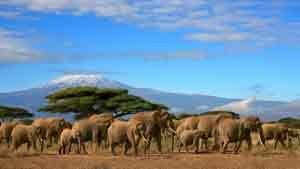 Reiseinformationen für einen Urlaub in Kenia