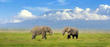 Kenia: Auf Safari sicher wilde Tiere beobachten