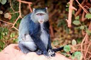 Unabhängig von der Reisezeit: Affen sind allgegenwärtig