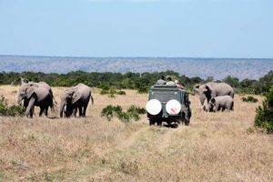 Kenia: Safari-Urlaub
