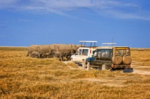 Kenia: Safari im Tsavo Nationalpark