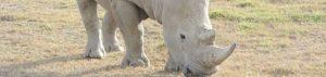 Kenia: Safari im Westen