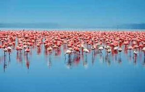 Lake Nakuru - Natronsee in Afrika