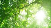 Landschaftstyp: Regenwald