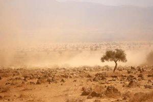 Trockensavanne: Bei Fahrten und Wind wird es staubig