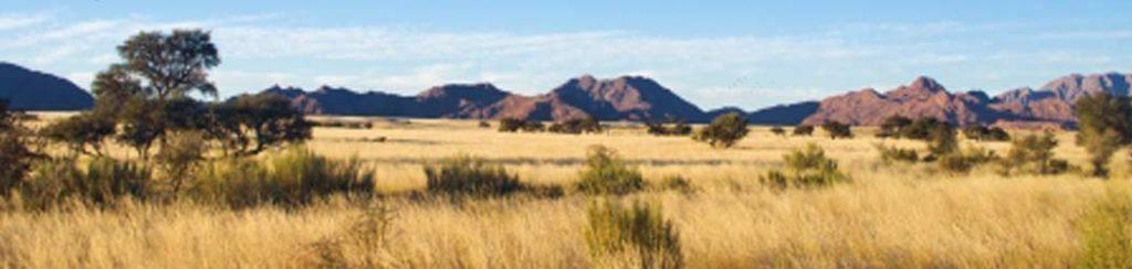 Landschaftstyp Savanne