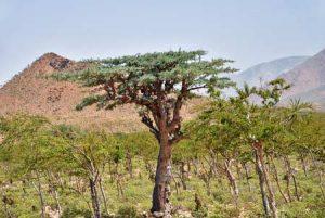 Typischer, dünn bewachsener Trockenwald in Afrika
