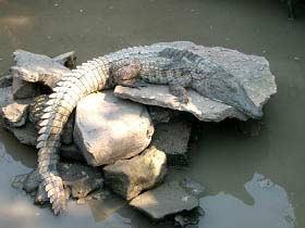 Krokodile im Wildpark bestaunen