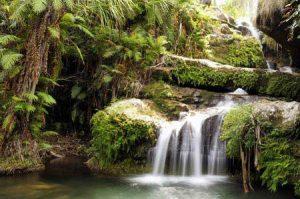 Wunderschönes Highlight - Wasserfälle im Regenwald