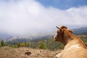 Madeira - Klima, Wetter und beste Reisezeit