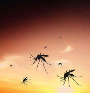 Infektionskrankheit Malaria in Afrika