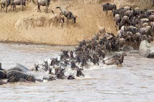 Große Tierwanderung am Mara