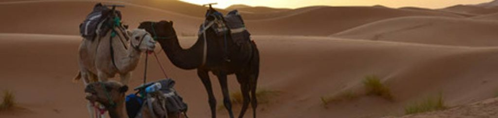 Marokko: Kameltrekking durch die Sahara