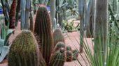 Marokko: Marrakesch, Jardin Majorelle