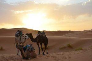 Marokko: Wüstentrekking per Kamel durch die Sahara