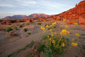 Namibia: Wüste im Brandbergmassiv