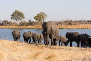 Elefanten im Bwabwata-Nationalpark in Namibia