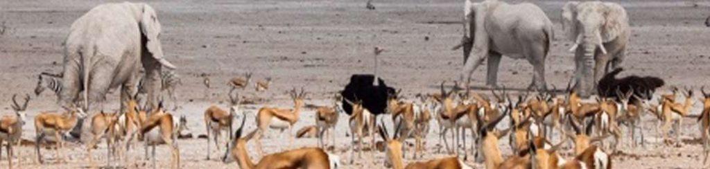 Namibia: Etosha Nationalpark