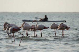Entspannung auf dem Wasser bei Walvis Bay