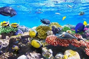 Traum für Taucher - Unterwasserwelt im Roten Meer