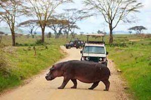 Reisen nach Afrika: Urlaub mit Safari