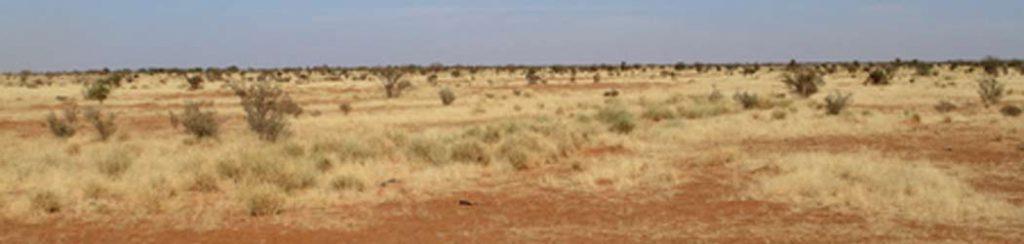 Die Sahelzone - Trockenheit pur