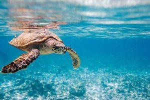 Seychellen: klares Wasser mit Meeresschildkröten