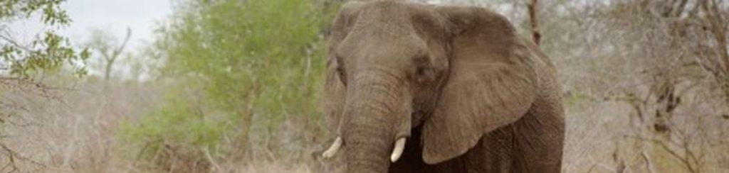 Südafrika: Kruger Park