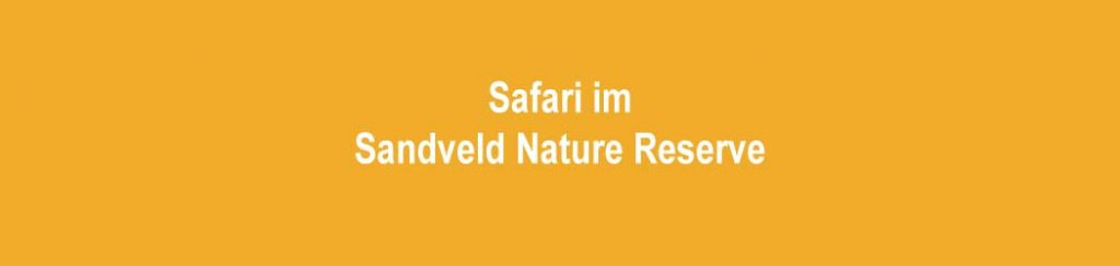 Safari im Sandveld Nature Reserve
