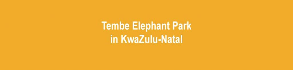 Tembe Elephant Park in KwaZulu-Natal