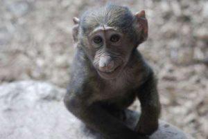 Affen siond ein Teil der touristischen Attraktion