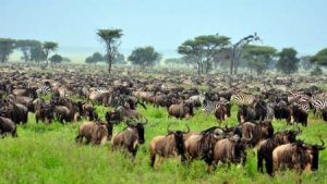 Tansania: The Great Migration in der Serengeti
